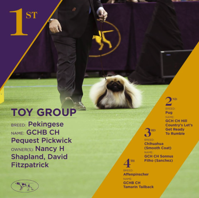 The 141st Westminster Kennel Club Dog Show - GLOW, WKC - The
